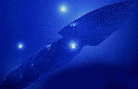 seaQuest 1
